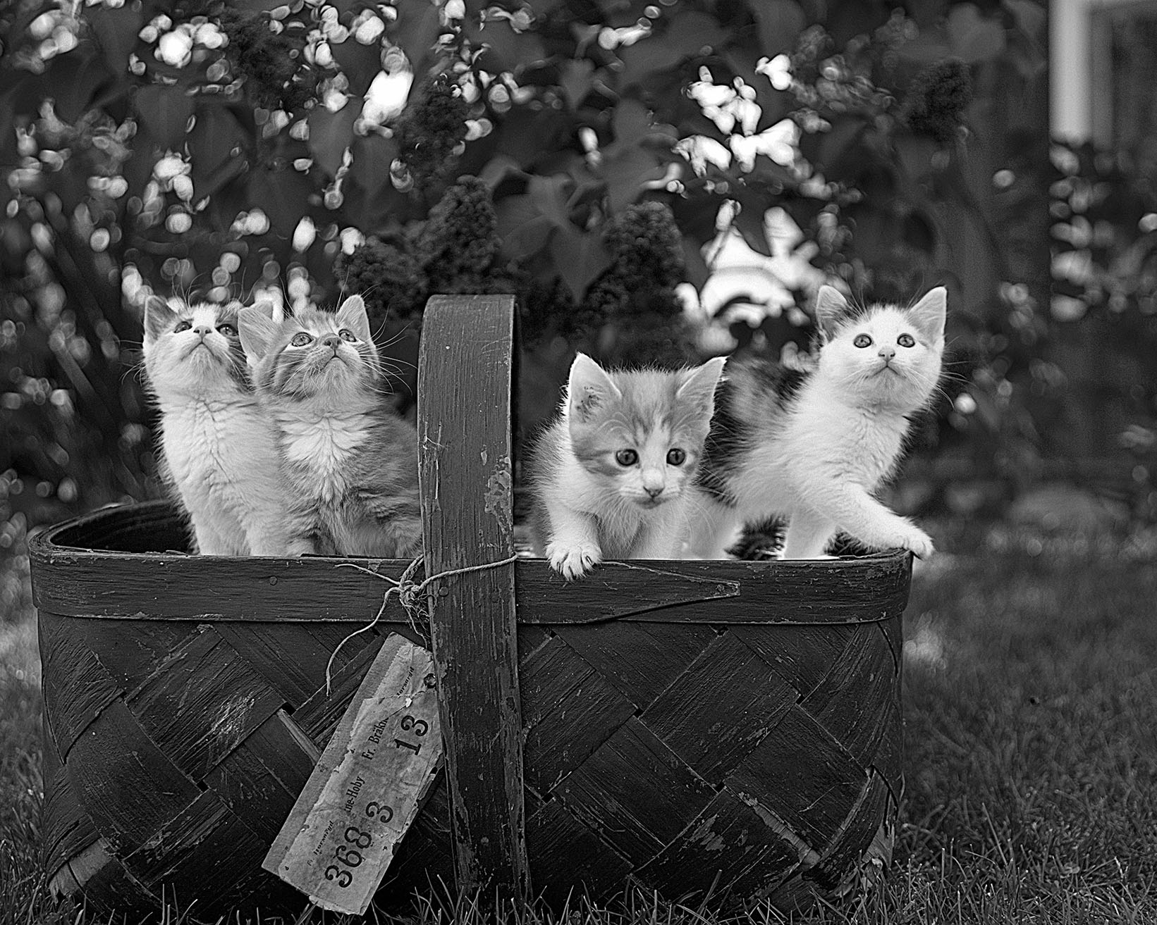 10. quattro gatti bn